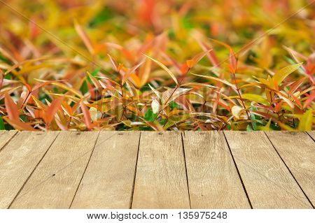 Empty wooden table or plank with colorful leaves or leaf of tree bush background for product display.