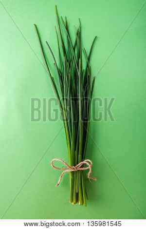 Fresh green chives on green background