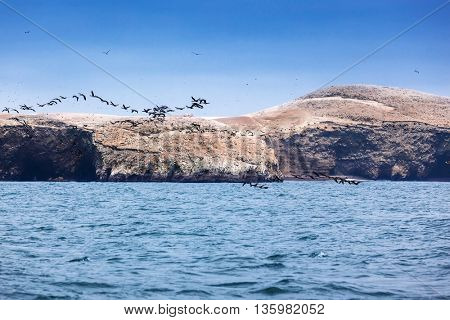 ocean, island and flock of birds on a sunny day