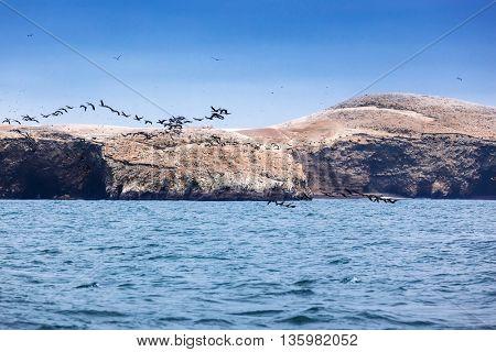 ocean, island and flock of birds on a sunny day