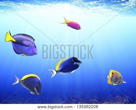 Underwater scene with beautiful tropical fish