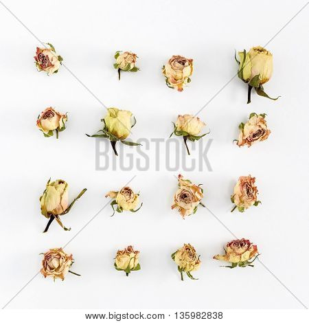 Flat lay image with dry roses, leaves on white background.