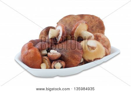 Young edible wild mushrooms Suillus lie stacked in a container for food of foam on a white background.