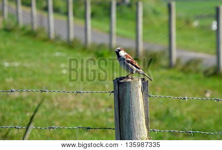 Little Bird Sitting On Wooden Stake With Barbed Wire