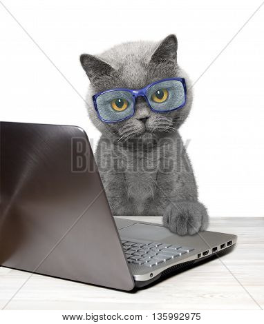 Cat using laptop or notebook -- isolated on white