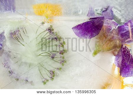 Frozen fresh beautiful flower of iris and air bubbles in the ice cube