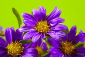 stock photo of floral bouquet  - photo of purple flowers - JPG