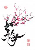 stock photo of cherry blossom  - Plum Blossom - JPG