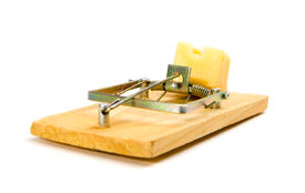 picture of pest control  - mouse trap with cheese  - JPG