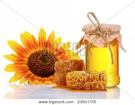 beautiful combs, honey and sunflower isolated on white