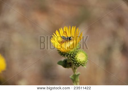 Flower with bee