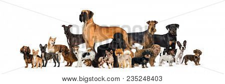 Large group of purebred dogs