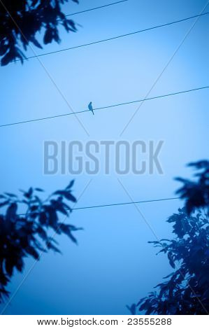 Silhouettes Of Bird Sitting On Wire