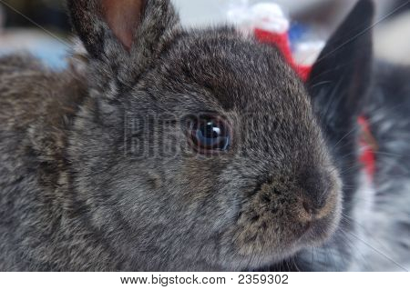 Close Up Snout Rabbit