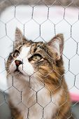 Tabby And White Cat Looking Up Behind A Metal Fence poster