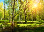 Spring Forest Landscape Scene. Bright Green Spring Forest Trees And Flooded Spring Forest Glade Unde poster