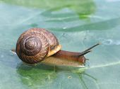 Snail On A Glass Surface
