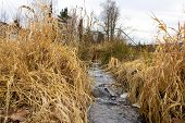 A Small Stream In The City Park At The End Of The Winter.small Creek And Dry Grass At The End Of Win poster