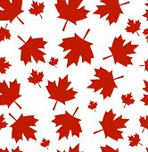 Vector Pattern From Maple Leaves. Red Maple Leaves On A White Background. A Background By Day Of Can poster