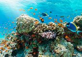 Colorful Underwater Reef With Tropical Fishes In The Indian Ocean, Maldives poster