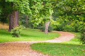 Winding Path In A Park Among Trees. Footpath Through The Park poster