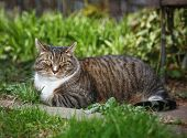 tabby cat in a yard with grass and plants around looking at the camera poster