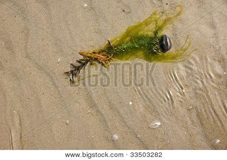 Underwater Green Weed