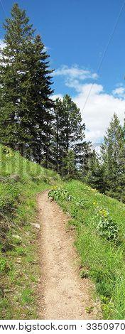 Blodgett Trail Vertical