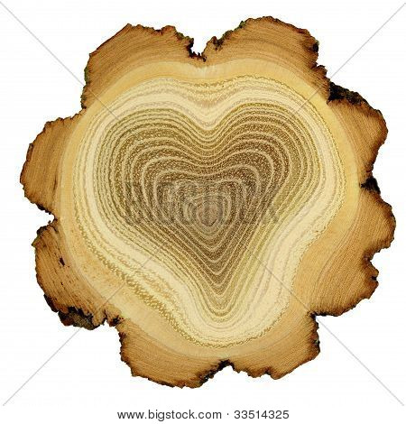 Heart Of Tree