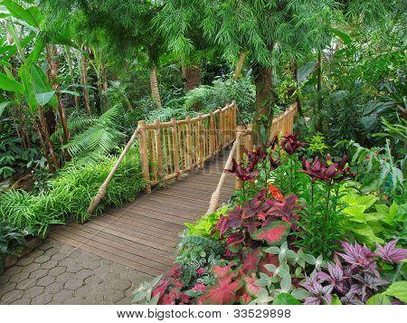 Ttropical Garden