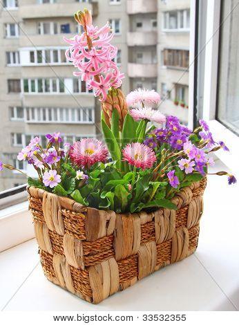 Seasonal Flowering Of Balcony
