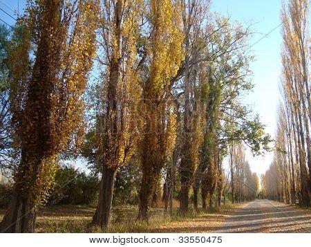 autumn in mendoza, argentina
