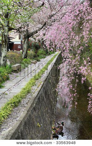 Caminhada do filósofo em Kyoto