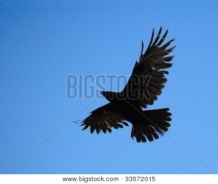 Raven In The Blue Sky