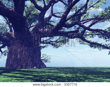 Impressive Baobab