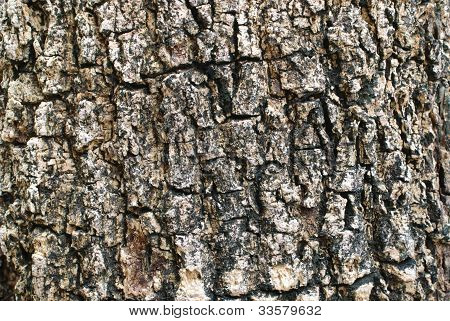 Bark Background Texture