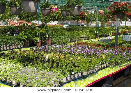 Garden Center Display