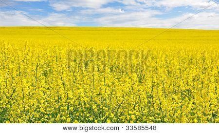 Campo de estupro floração