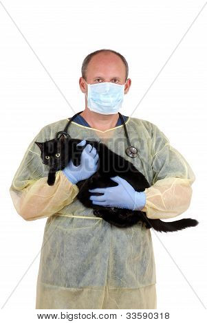 veterinarian taking cat to surgery
