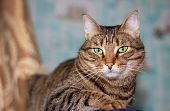 Feline Face With Green Eyes, Close-up. European Shorthair Cat Looks Away. Background With Cat And Fr poster