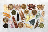 Chinese herbal medicine to treat asthma, COPD & respiratory diseases with herb & spice collection,   poster