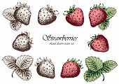 Set Of Sketchy Strawberries. Hand Drawn Vector Illustration. Isolated Elements For Design. poster