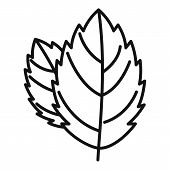 Mint Leaf Icon. Outline Mint Leaf Vector Icon For Web Design Isolated On White Background poster