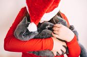 A Teenager Girl In A Red Fluffy Santa Claus Hat Holds A Fluffy Gray Kitten poster