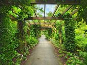 image of pergola  - Pergola passage in the garden surrounded by wisteria and climbing plants - JPG