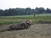 stock photo of mennonite  - Amish farmer making hay with two horse - JPG