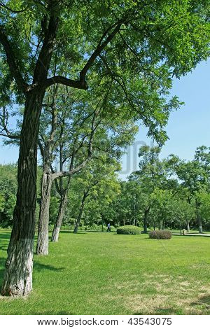 Afforestation Landscape In A Park