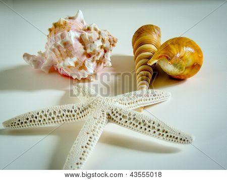 Sea sheels