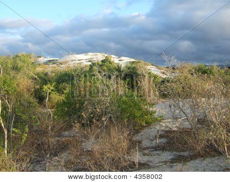 Isabella Island Beach