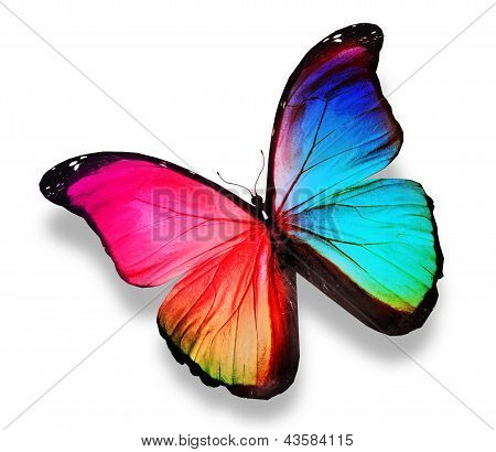 Morpho Color Butterfly , Isolated On White